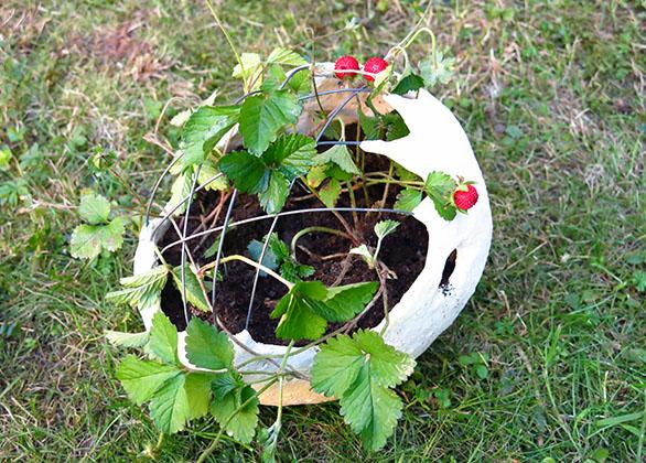 bepflanzung_06_klein